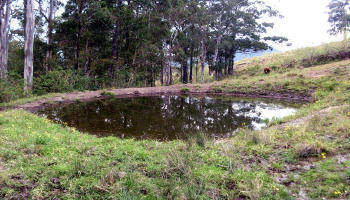 This dam for stock use was examined for possible Yowie feet