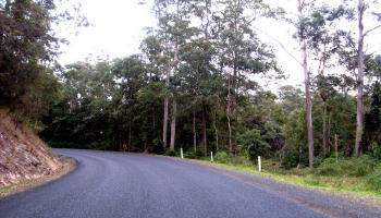 Looking north towards the roadside forest above the gully